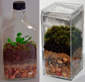 make your home artful with terrariums