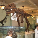 Art and Science Meet at the Museum of Natural History